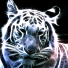 Tamtam69's profile image
