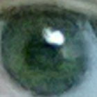 elbolastristes's profile image