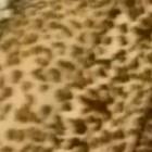 casperwood's profile image
