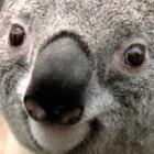 littlefinger69's profile image