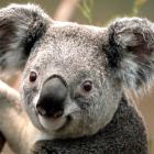 Blackapu's profile image